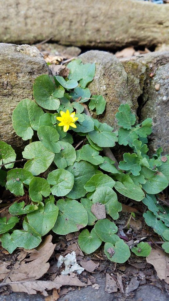 Single Flower on Stone Steps