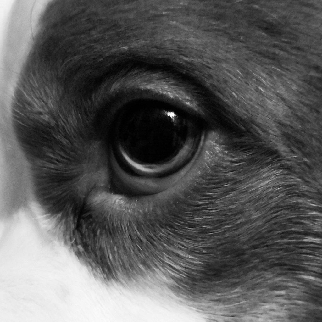 Eye of the Beast