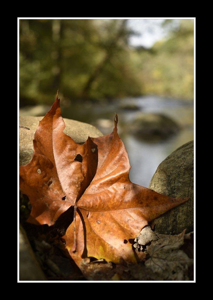 Falling Leaf (50mm)