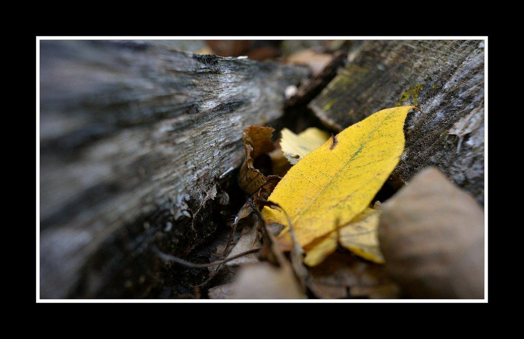 Leaf And Log