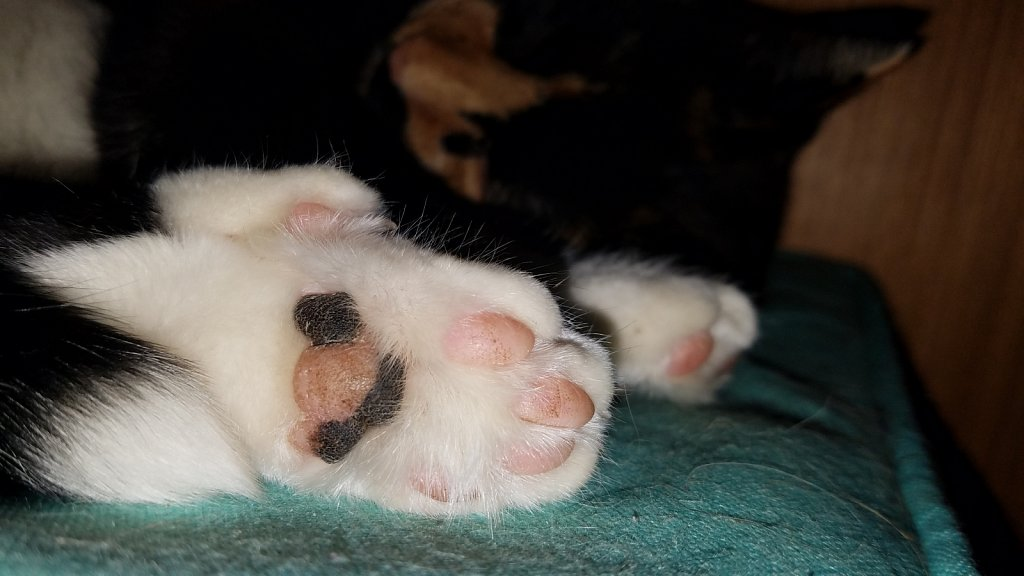 Sleepy Beans