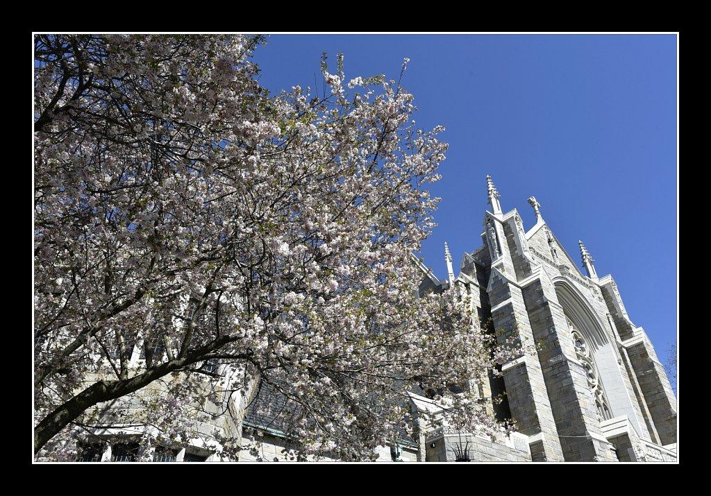 Blossoms at Saint Paul Church
