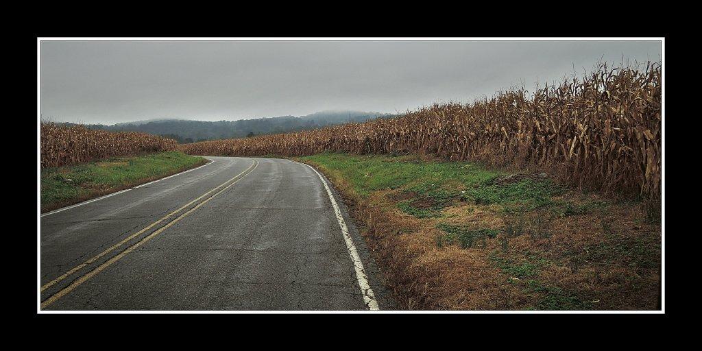 Jersey Corn