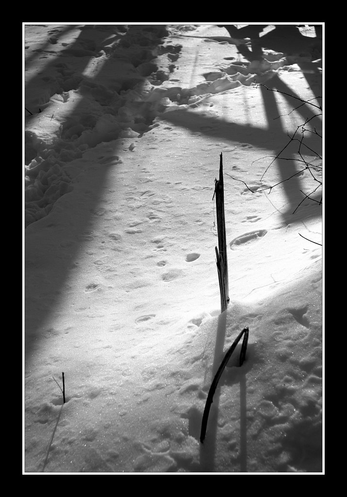 Shadows On The Snow