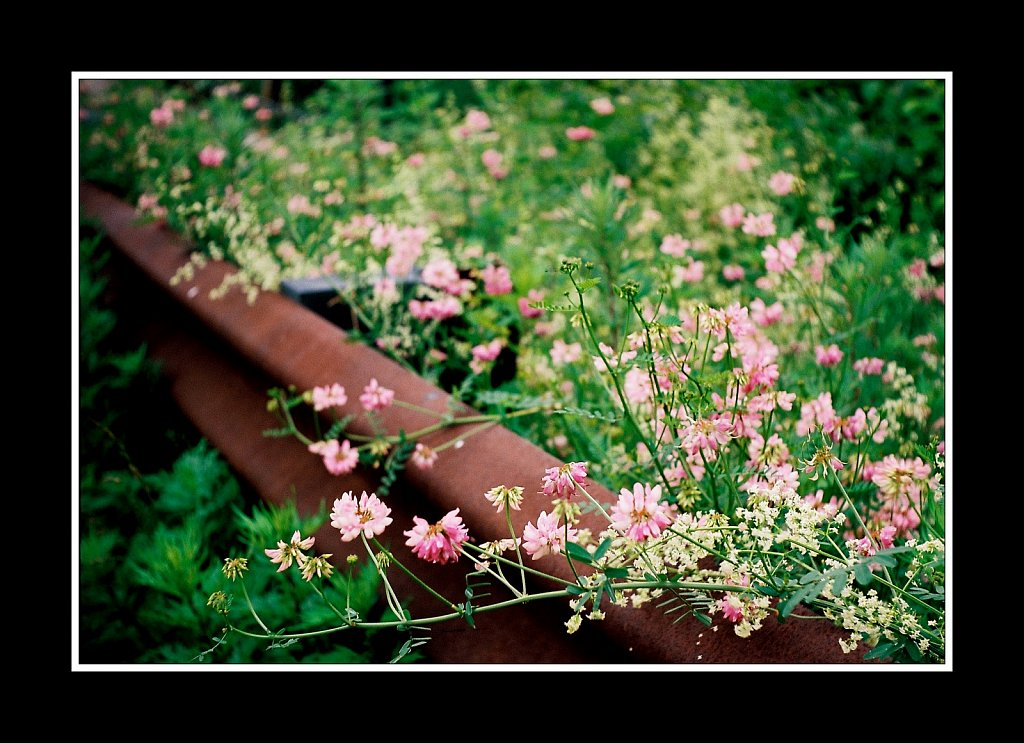Guarding the Wildflowers