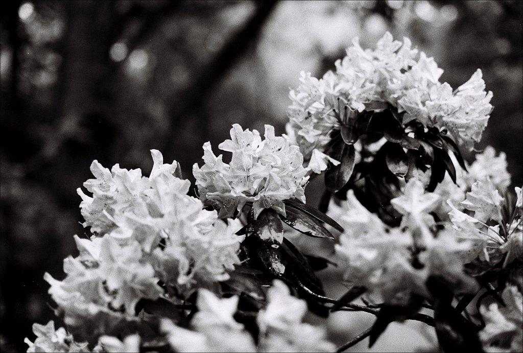 2019218F-Nikon-F100-Kodak-TriX-18.jpg