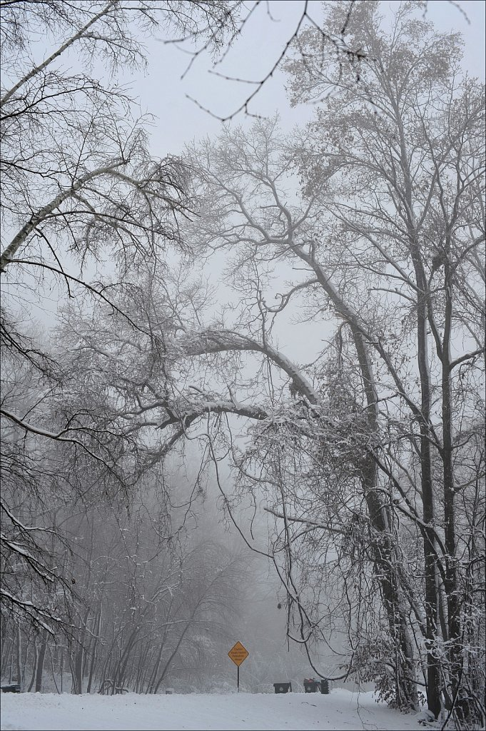Fog with Snow