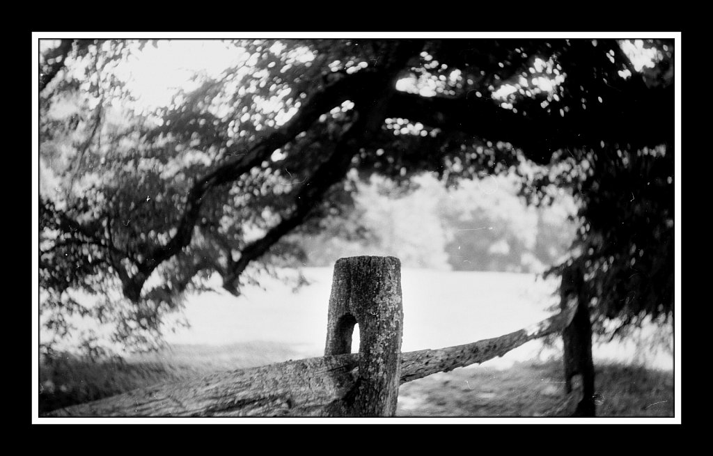 Argus Day at Bamboo Brook