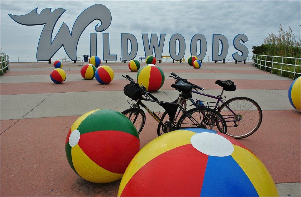Along the Wild Wood Boardwalk
