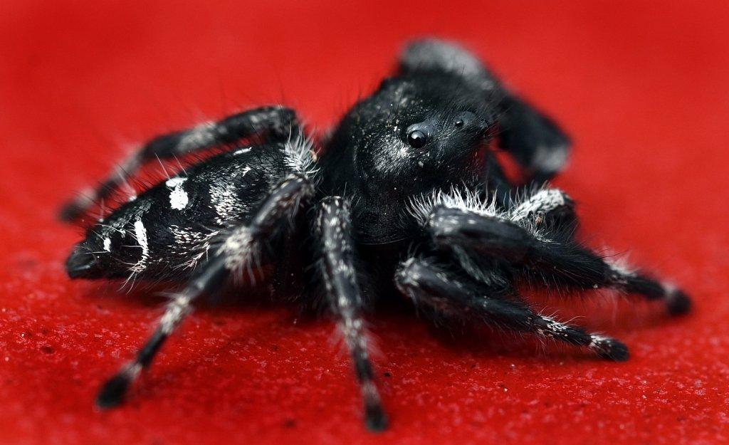 Spider-3721-copy.jpg