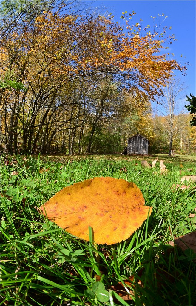 Fall 2021 Upstate NY